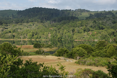 Highway1_nach_Monterey_20090603-06862.jpg