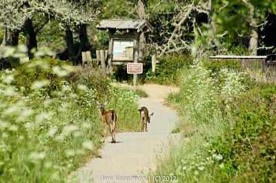 Highway1_nach_Monterey_20090603-06920.jpg