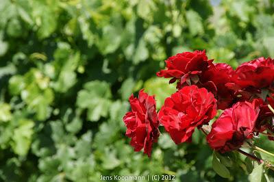 Napa_Valley_20090618-09561.jpg