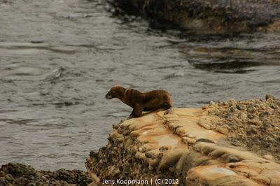 Point_Lobos_Monterey_20090604-07145.jpg