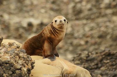 Point_Lobos_Monterey_20090604-07152.jpg