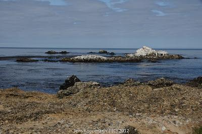 Point_Lobos_Monterey_20090604-07181.jpg