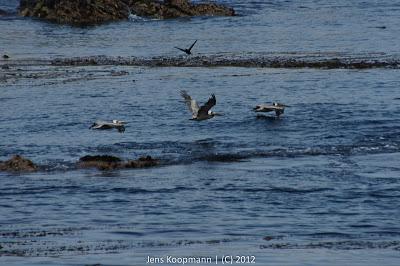 Point_Lobos_Monterey_20090604-07193.jpg