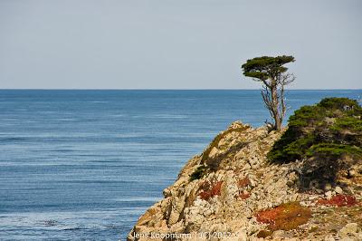 Point_Lobos_Monterey_20090604-07218.jpg