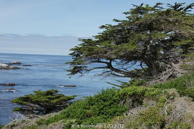 Point_Lobos_Monterey_20090604-07221.jpg