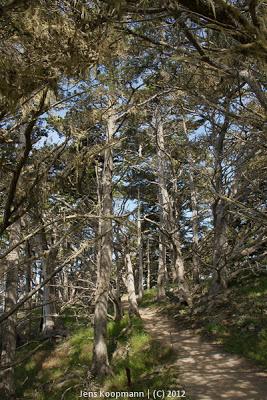 Point_Lobos_Monterey_20090604-07225.jpg