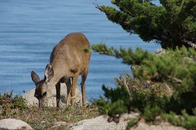 Point_Lobos_Monterey_20090604-07230.jpg