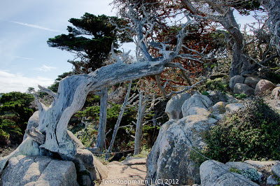 Point_Lobos_Monterey_20090604-07238.jpg