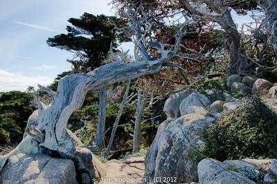 Point_Lobos_Monterey_20090604-07238.jpg