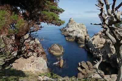Point_Lobos_Monterey_20090604-07243.jpg