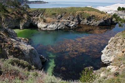 Point_Lobos_Monterey_20090604-07255.jpg