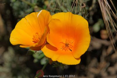 Point_Lobos_Monterey_20090604-07269.jpg
