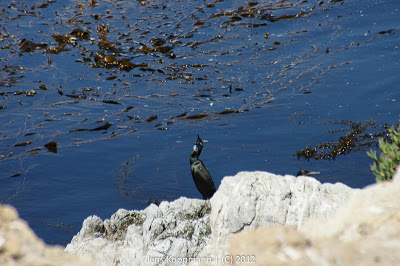 Point_Lobos_Monterey_20090604-07286.jpg