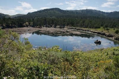 Point_Lobos_Monterey_20090604-07319.jpg