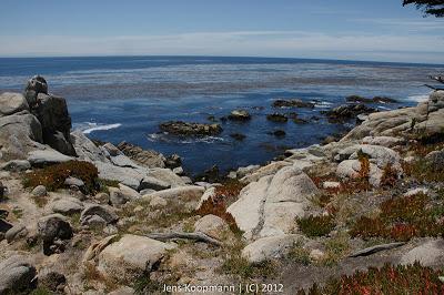 Point_Lobos_Monterey_20090604-07354.jpg