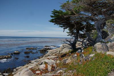 Point_Lobos_Monterey_20090604-07355.jpg