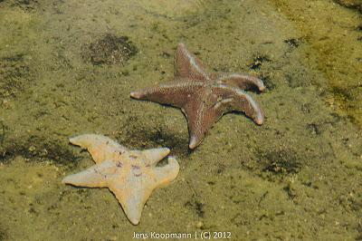 San_Diego_Seaworld_20090611-08757.jpg