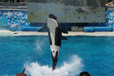 San_Diego_Seaworld_20090611-08789.jpg