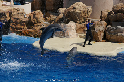 San_Diego_Seaworld_20090611-08880.jpg