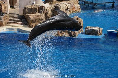 San_Diego_Seaworld_20090611-08883.jpg