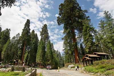 Sequoia_KingsCanyon_20090616-09243.jpg