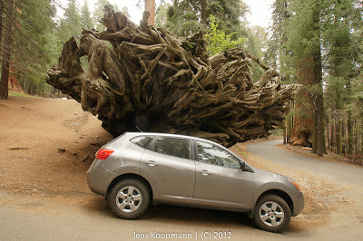 Sequoia_KingsCanyon_20090616-09254.jpg