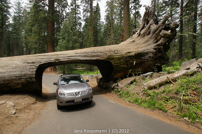 Sequoia_KingsCanyon_20090616-09266.jpg