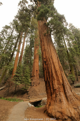 Sequoia_KingsCanyon_20090616-09302.jpg