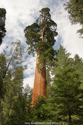 Sequoia_KingsCanyon_20090616-09382.jpg