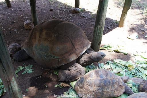 Kenia_20110808_03898