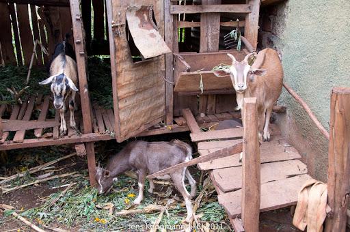 Kenia_20110809_04049