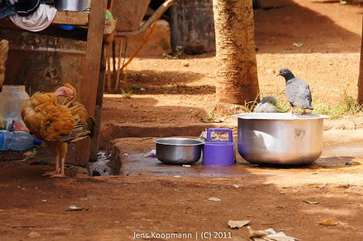 Kenia_20110809_04094
