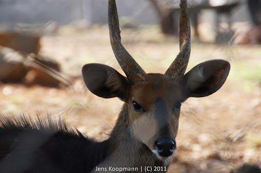 Kenia_20110810_04192