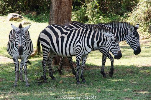 Kenia_20110810_04322