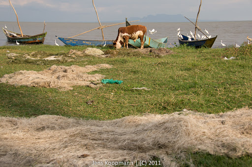 Kenia_20110812_04524
