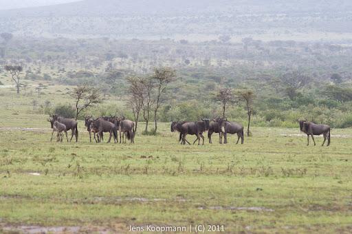 Kenia_20110815_04707