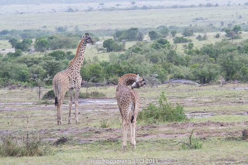 Kenia_20110815_04712