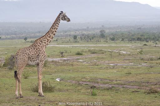 Kenia_20110815_04715