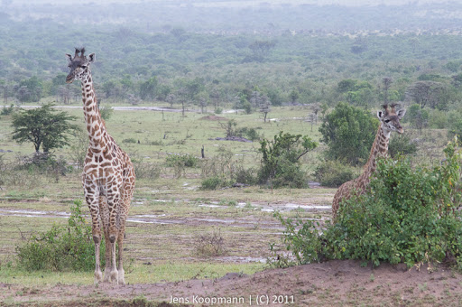 Kenia_20110815_04716