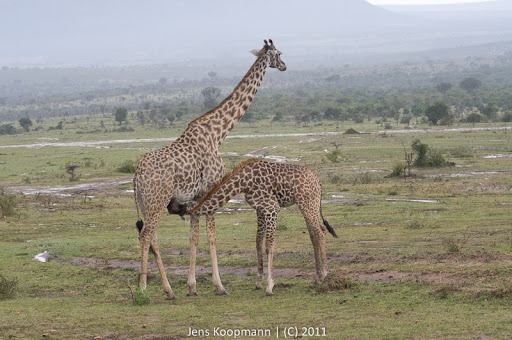 Kenia_20110815_04720