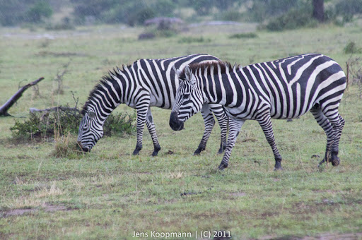 Kenia_20110815_04730