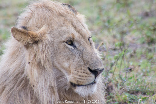 Kenia_20110815_04758