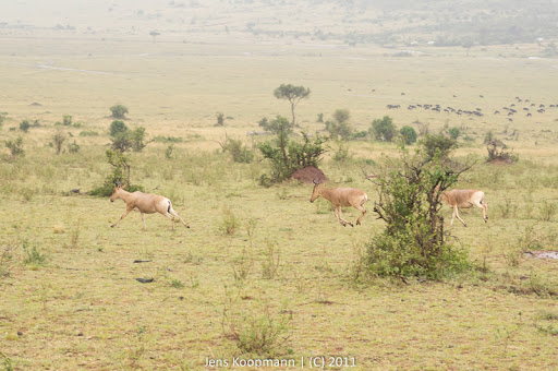Kenia_20110815_04800