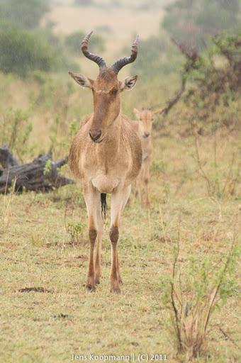 Kenia_20110815_04820