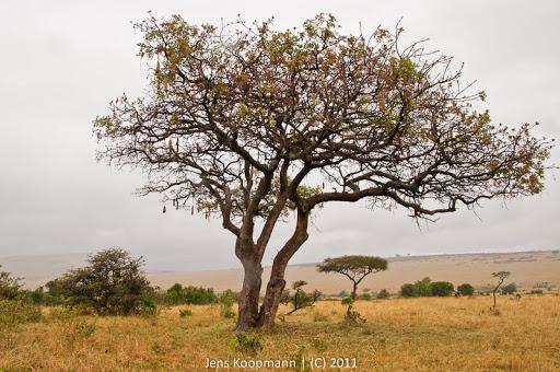 Kenia_20110815_1735