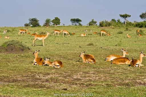 Kenia_20110816_04852