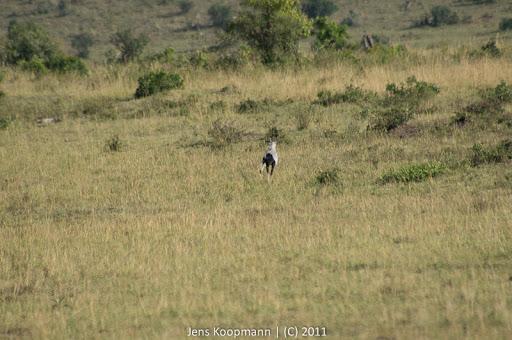 Kenia_20110816_04864