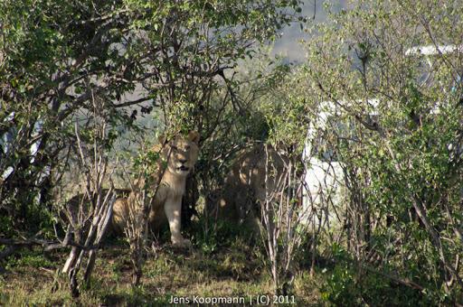 Kenia_20110816_04886