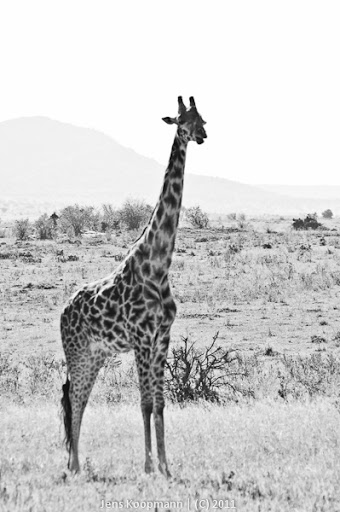 Kenia_20110816_04917