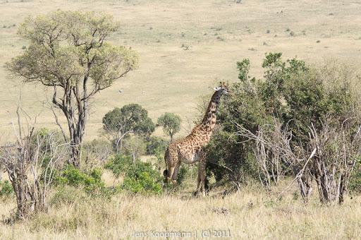 Kenia_20110816_04952